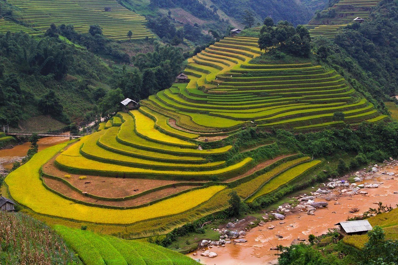Les terrasses de Mu Cang Chai - Yen Bai - Vietnam