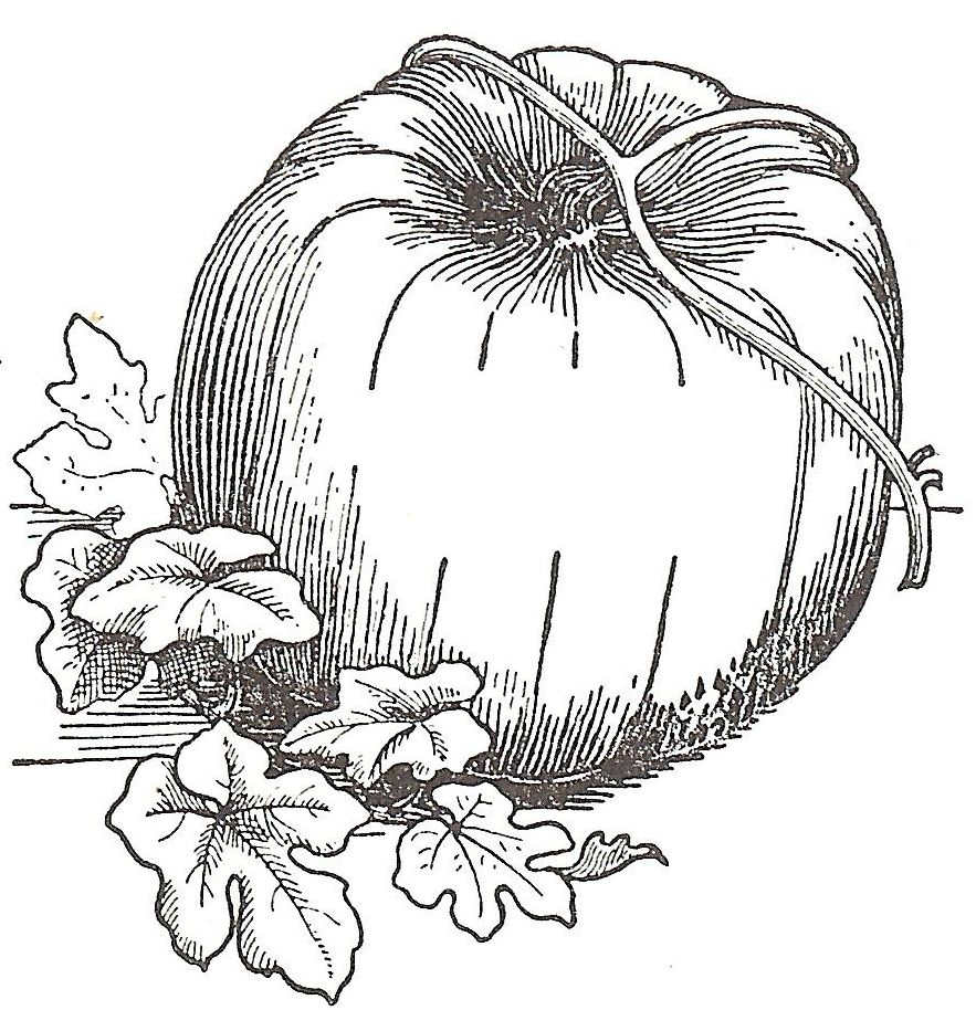 Antique Graphics Wednesday - 12 Fruits and Vegetables | Book images ...