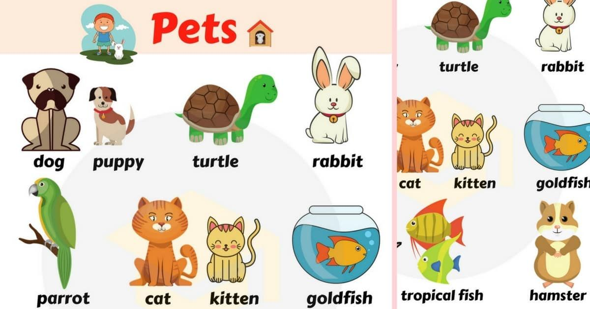 Pin By 7esl Com On Pets List Of Animals Pets Pet Names