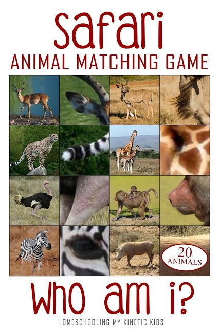 Who Am I? African Safari Matching Game and 3-part Cards