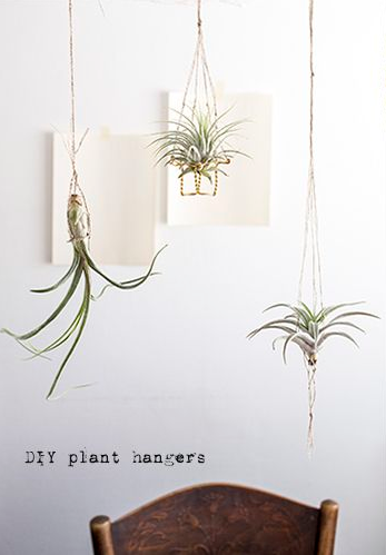 Diy Wire Air Plant Holder Http Monsterscircus Com 2013 05 16 Diy Till Air Plant Hanger Air Plant Holder Plant Holder Diy Air Plants