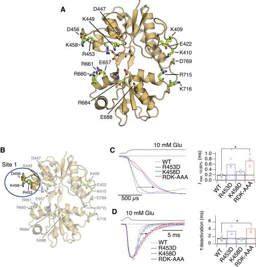 Yu Et Al. Show That The Ligand-binding Domain Of