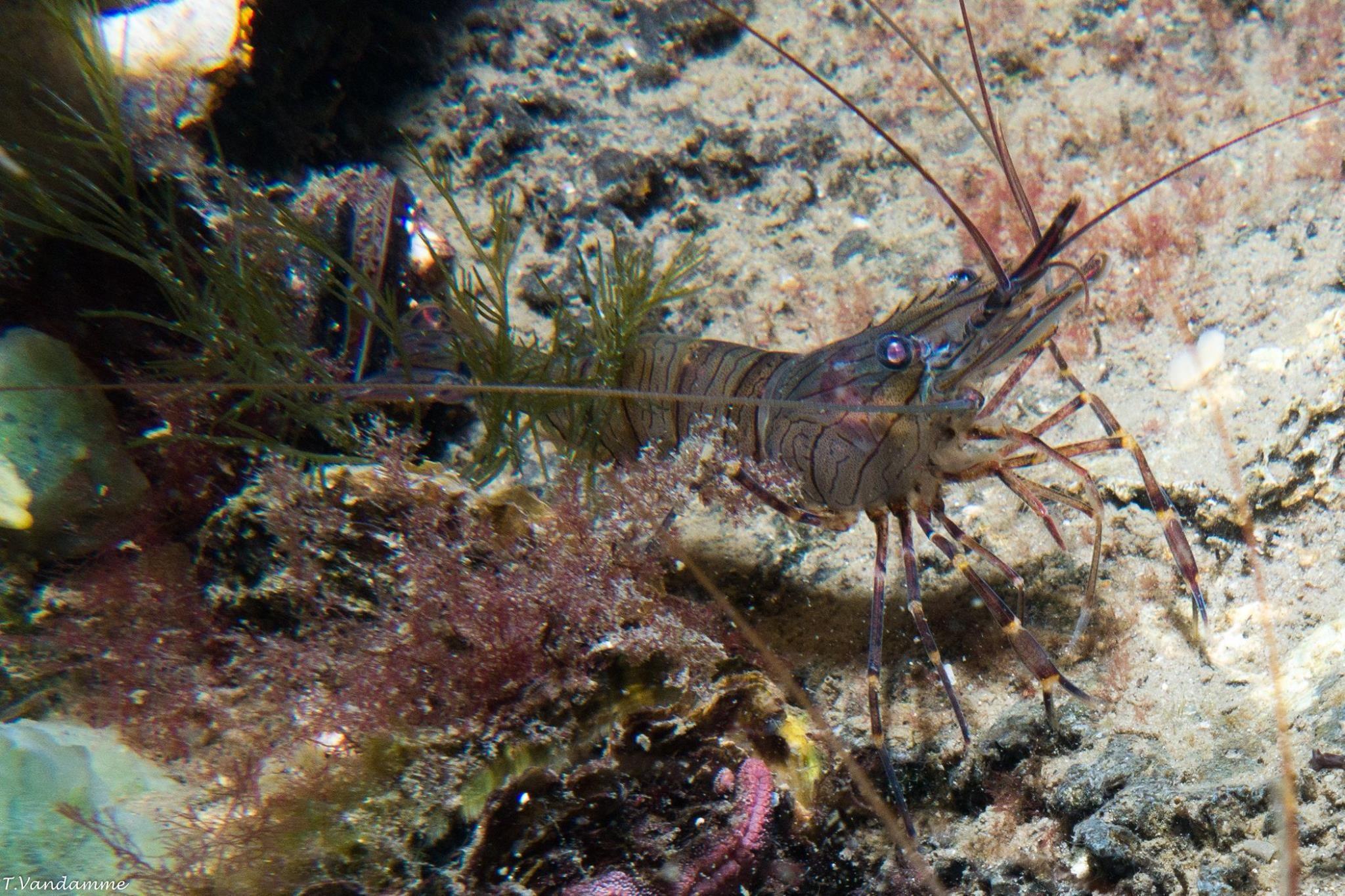 d7d462516c870dede00ac2507f035d1d Luxe De Crevette Aquarium Des Idées