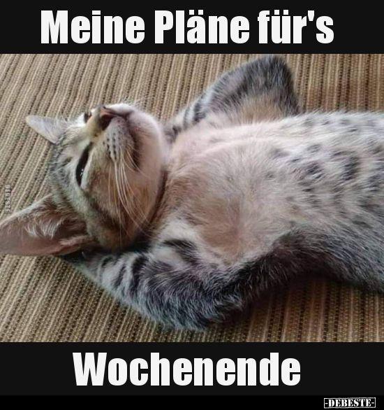 Samstag Ist Badetag Spruch Des Tages Lustig Katzenspruche Lustig
