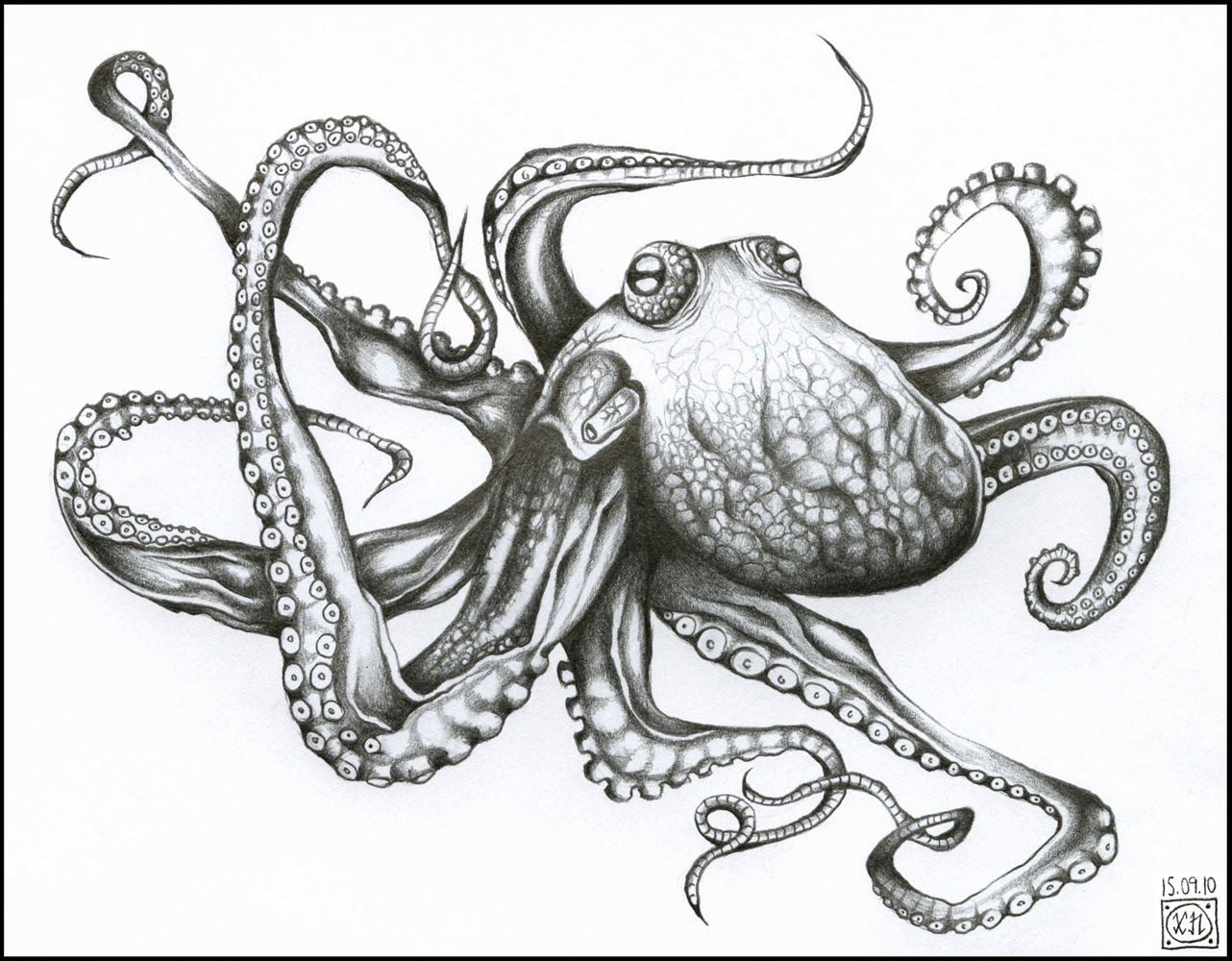Realistic drawings of octopus images for Octopus drawing easy