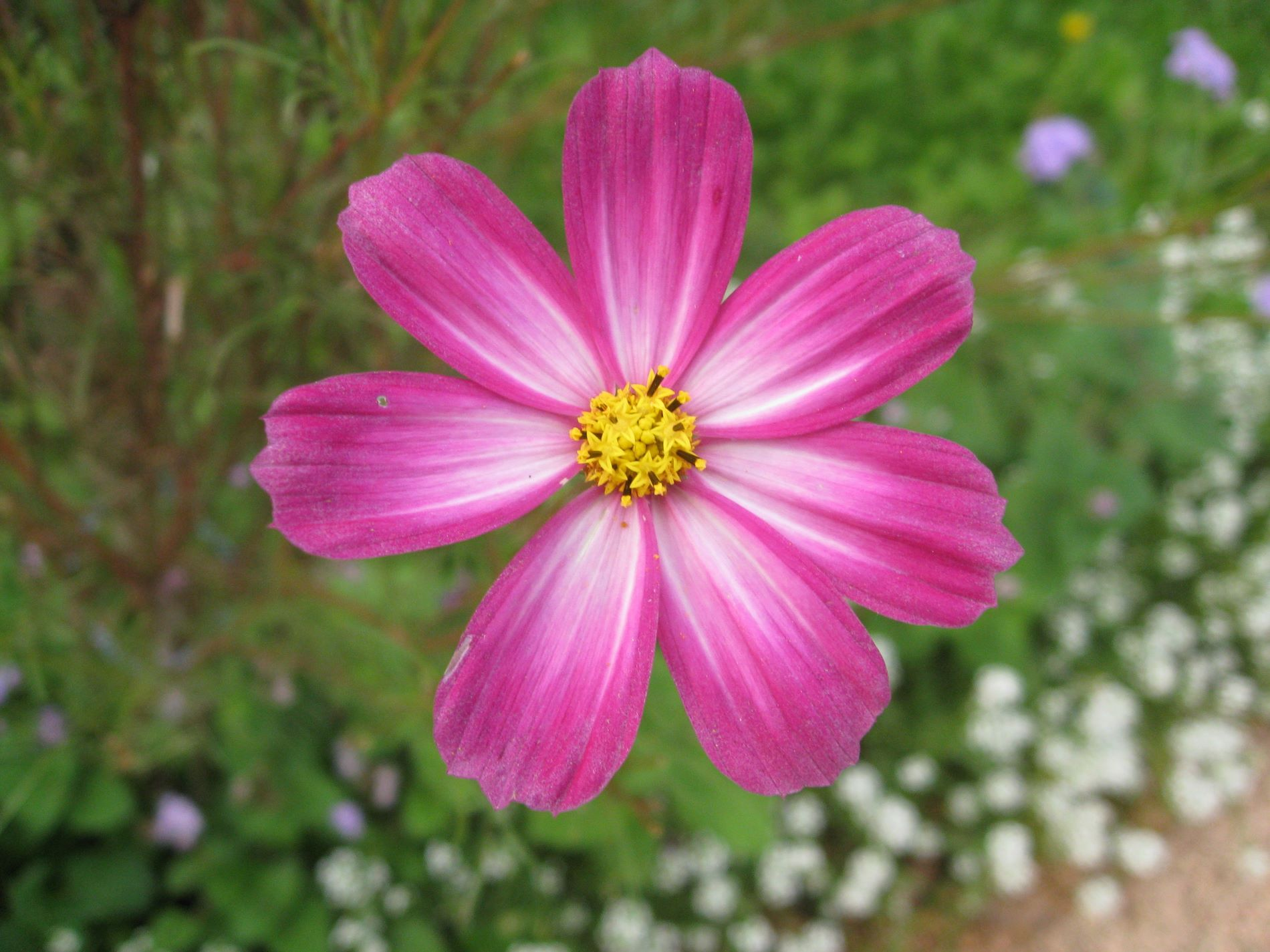 picture flower Wallpaper World Fleurs Pinterest