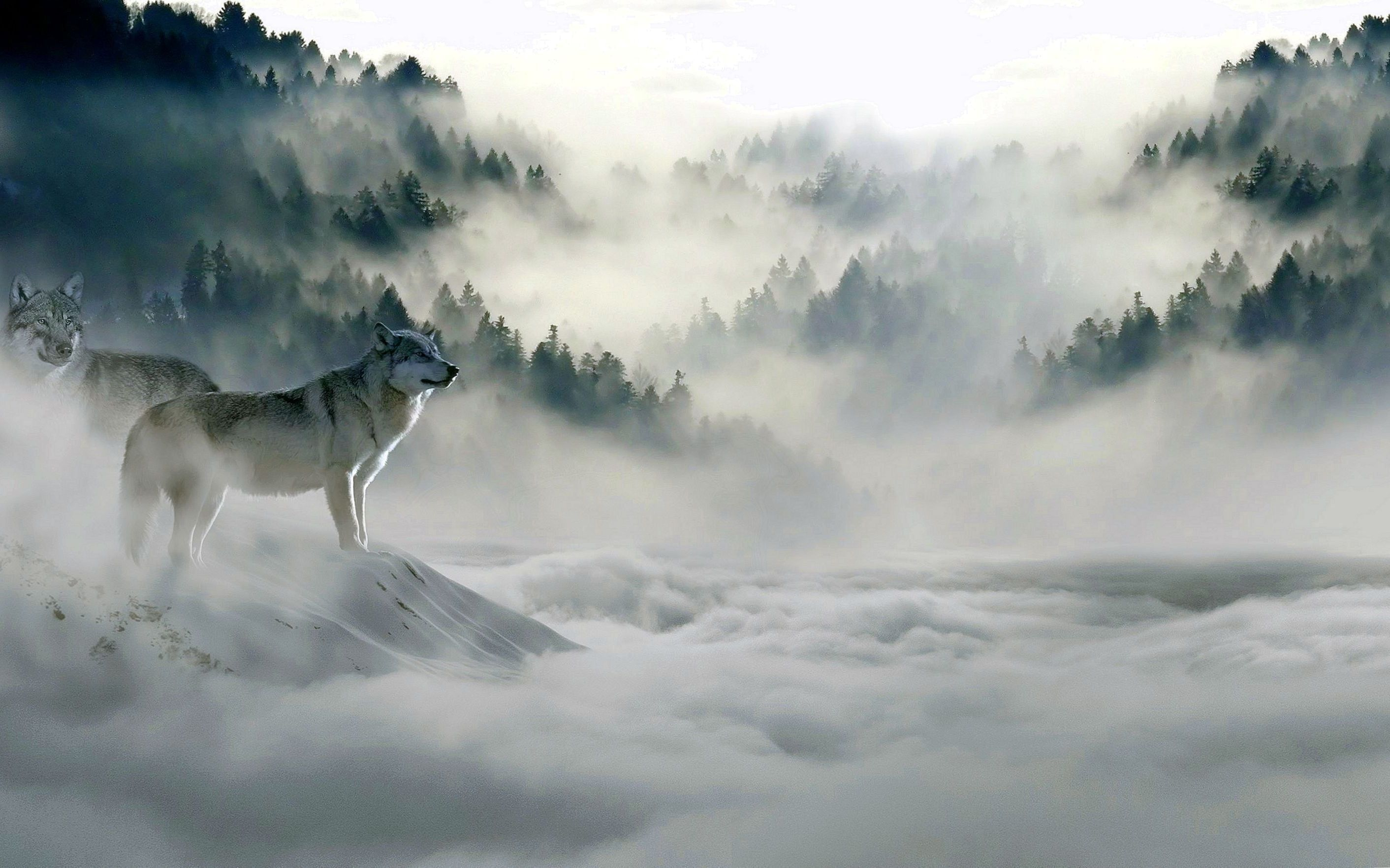 Best 4k Wolf Wallpapers Best 4k Wolf Wallpapers Wolf Wallpaper Desktop Wallpaper Xmas Wallpaper