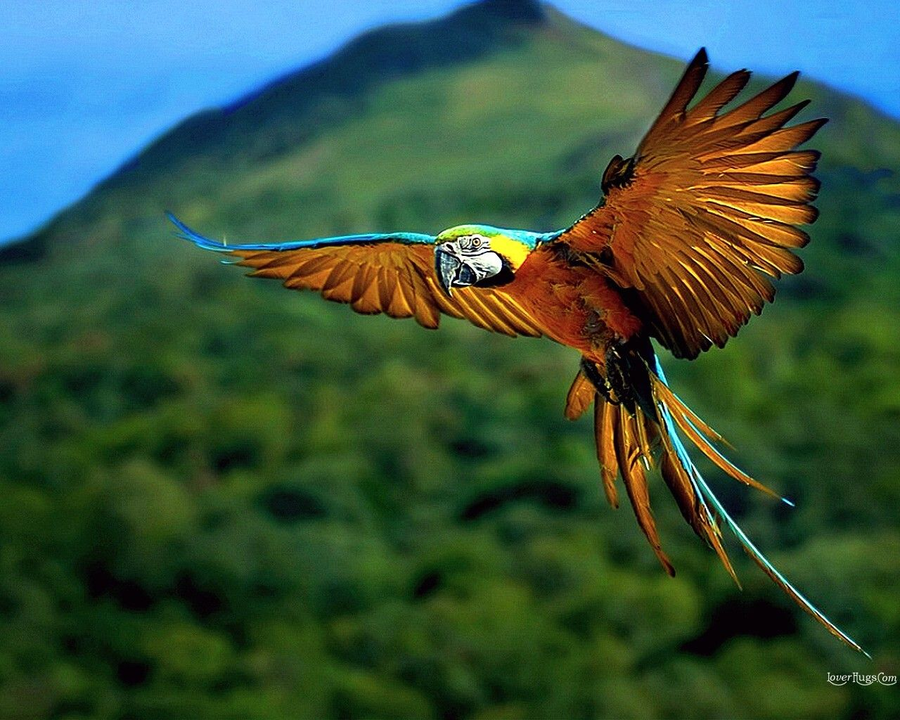 yes, parrots are in the wild & amazingly beautiful. | birds