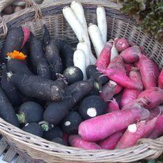 7 légumes à semer en fin dété au potager