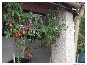 Plusieurs plantes donnent un rendement plutôt intéressant