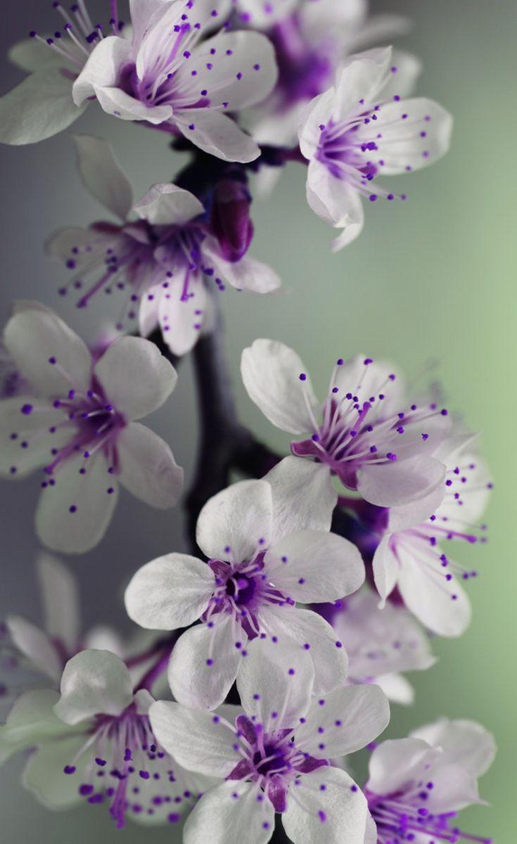 Purple White Flowers Interesting Things Pinterest Flower