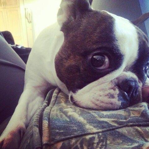 My bulldog roxie ...love her