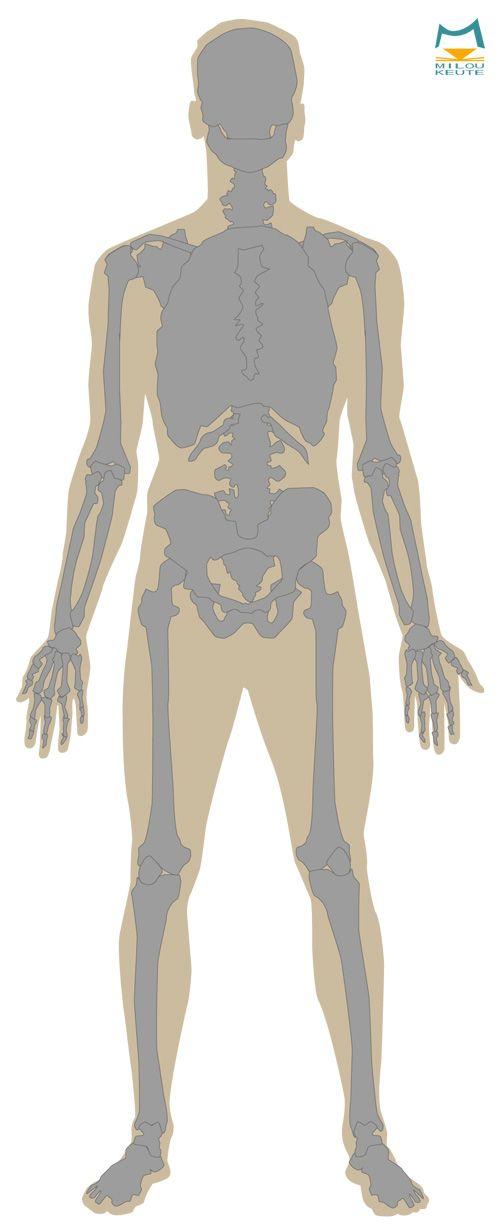 Menschliche Anatomie, das Skelett des Menschen digital Illustriert ...