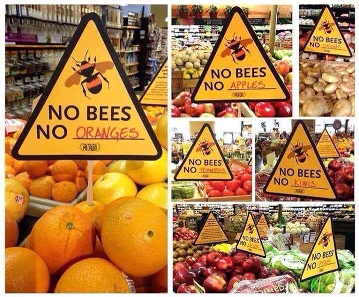 Protégeons nos abeilles Bées
