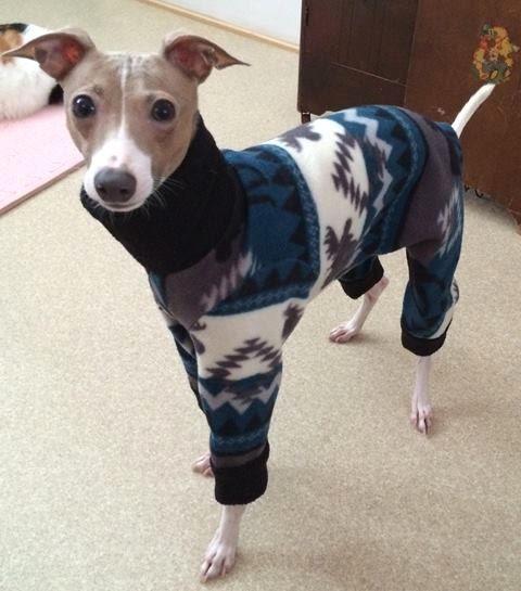Clothing For Italian Greyhounds - Goldenacresdogs.com