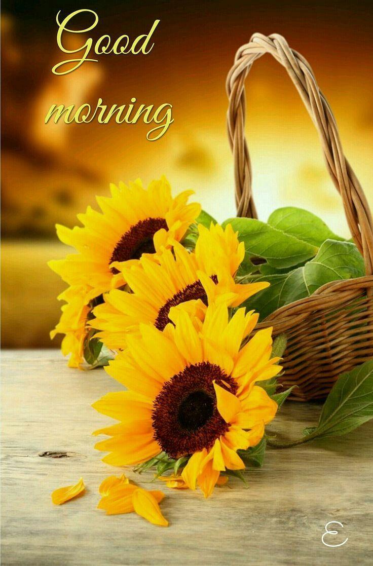 Good Morning Greetings Good Morning A Good Day Pinterest