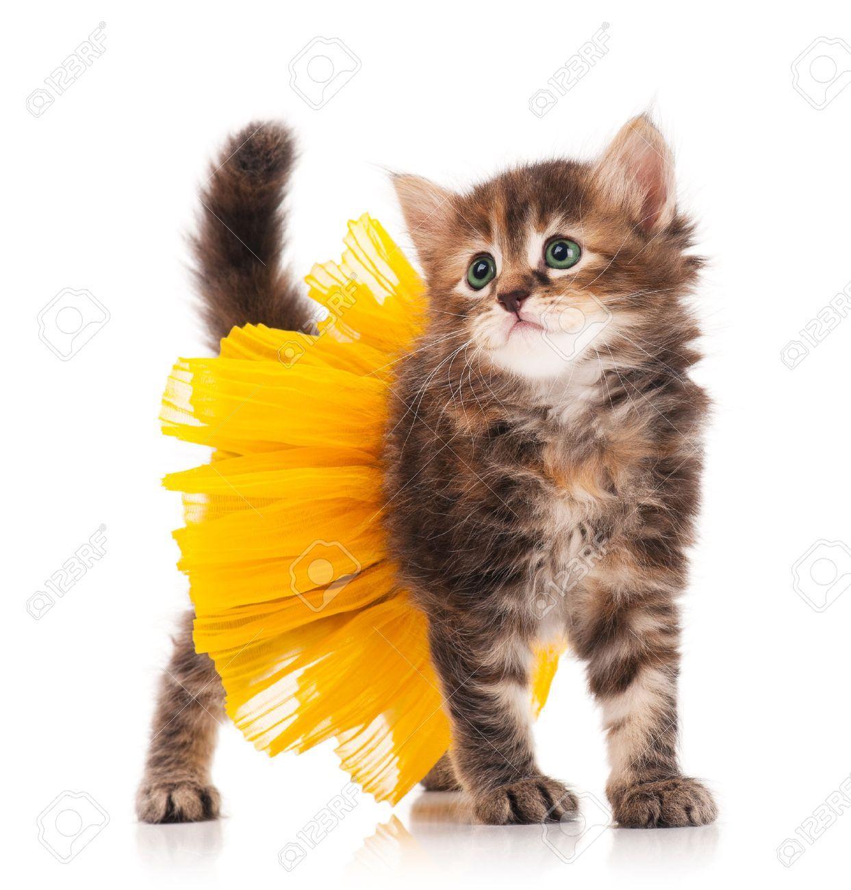 Stock Photo Cute Fluffy Kittens Kitten Costumes Kittens Cutest
