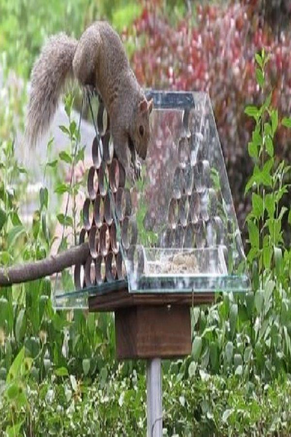 Image Result For Diy Squirrel Proof Bird Feeder Slinky Squirrel Proof Bird Feeders Bird Feeders Squirrel
