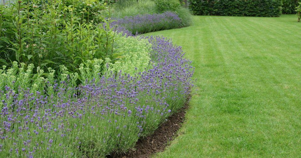 Ontwerp tuin strakke tuinen stadstuinen moderne tuinen
