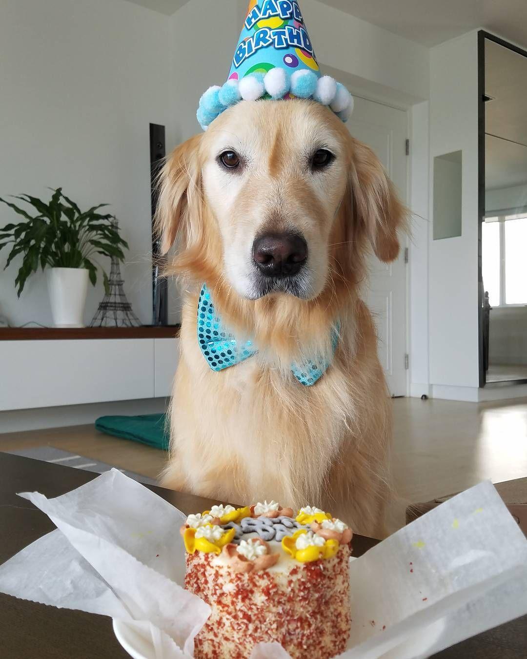 Birthday Golden Retriever Dog Birthday Dog Birthday Party