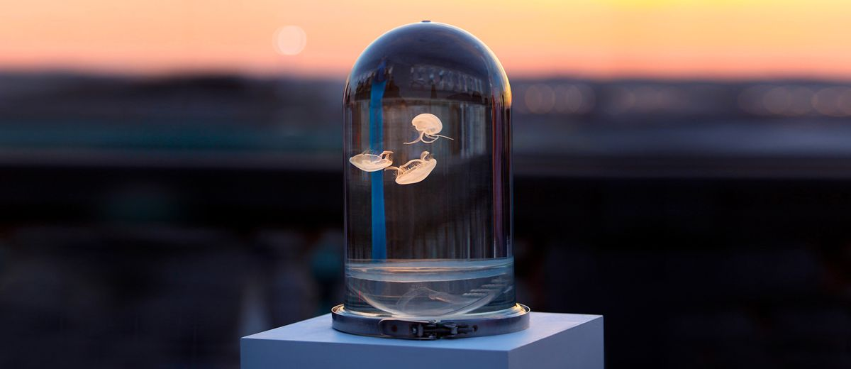 Florence Samain and Dave Monfort of the Belgium-based studio The Darwin Sect have designed this striking tank to display at home one of the most intriguing creature of the sea: Jellyfish.