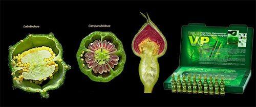 Tắm trắng da an toàn từ Noãn thực vật - Trung tâm chăm sóc sắc đẹp D&D Beauty Skin
