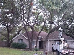 http://texastreeservice.org/tree-trimming.html  Austin Tree Service