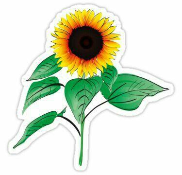 Pin De Anita Barabucci En Stickers Girasoles Dibujo Pegatinas Y