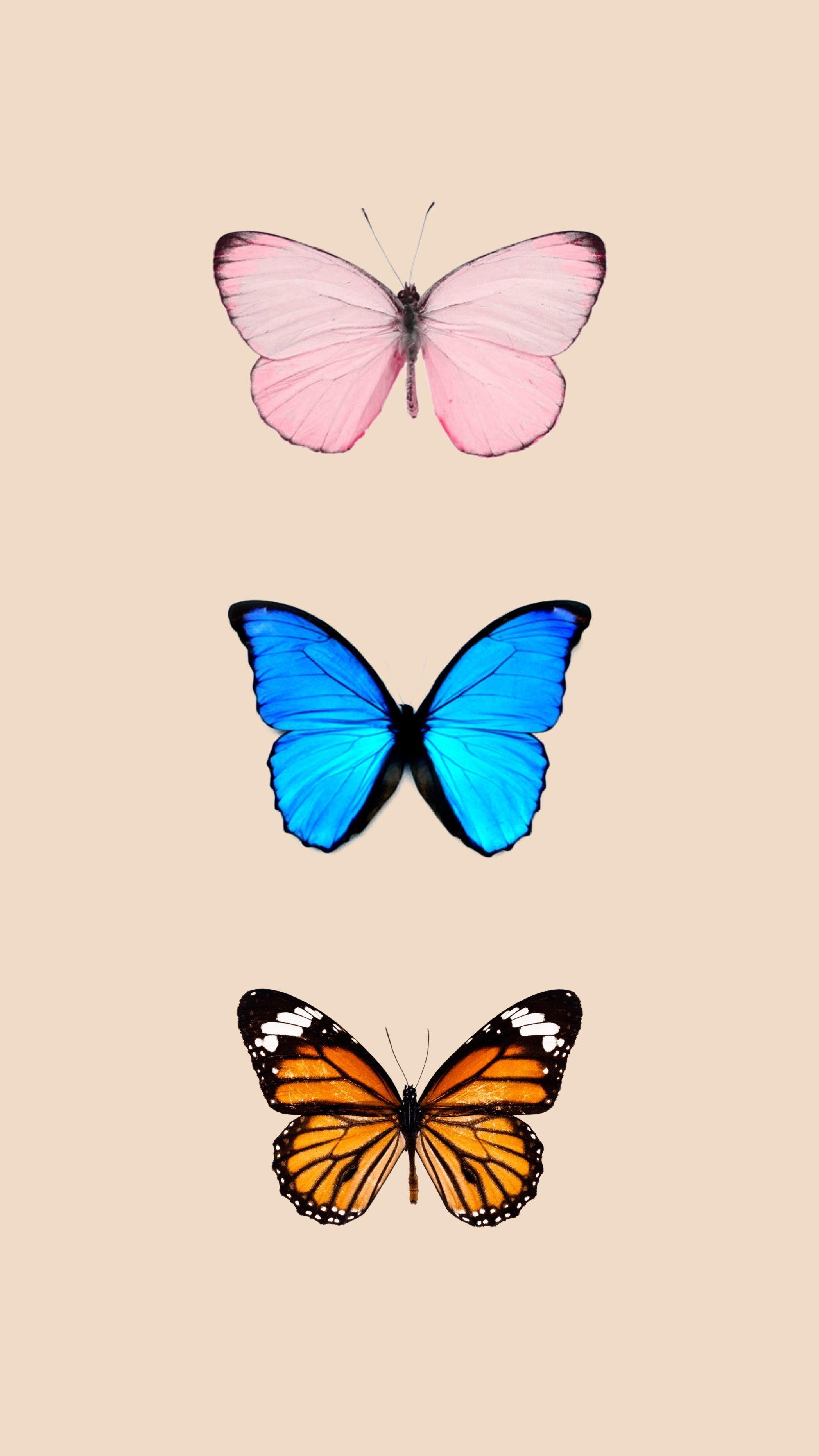 Photo of Schmetterling Tapete – Schmetterling Tapete / Hintergrund iPhone Imágenes efect…