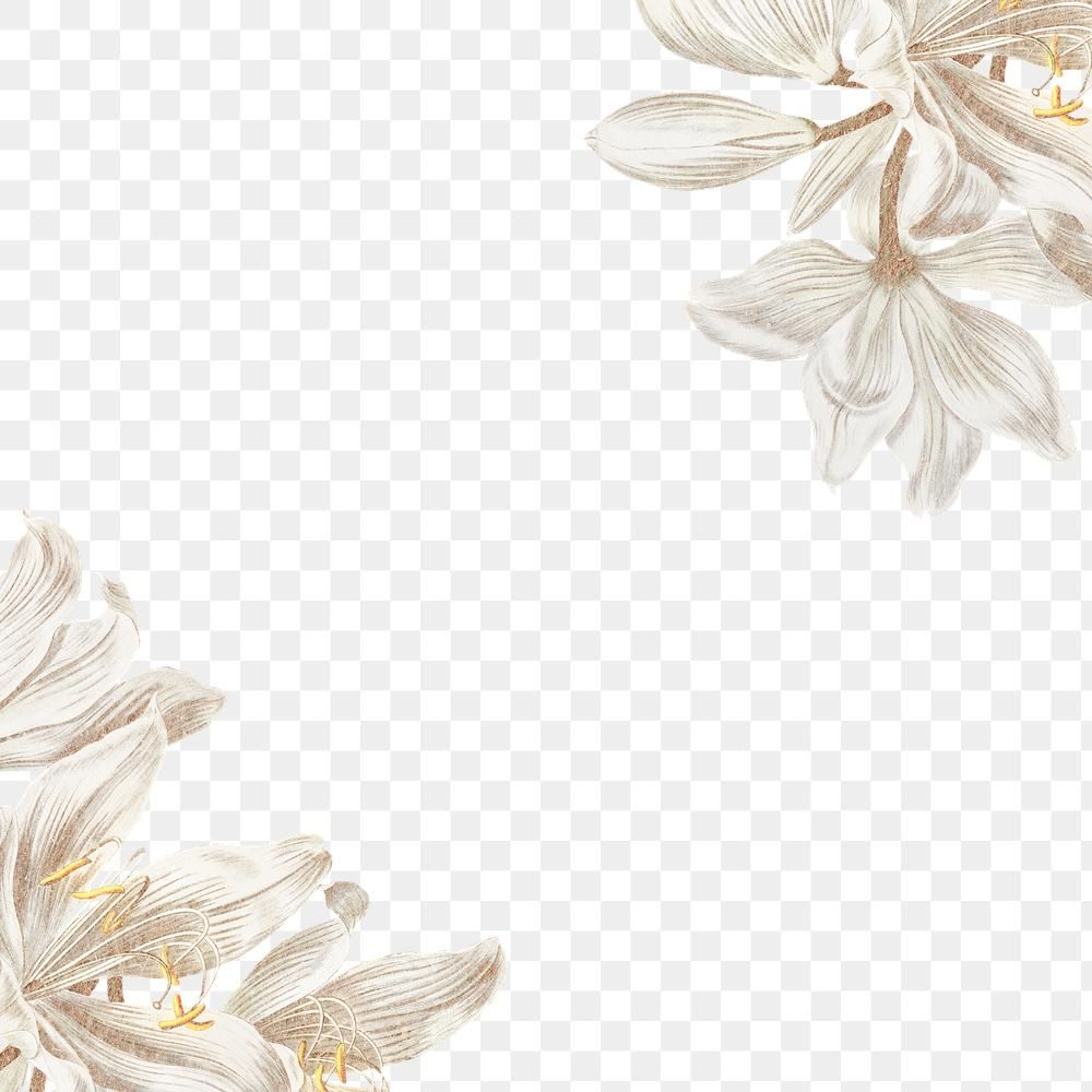Vintage White Lily Flower Frame Design Element Free Image By Rawpixel Com Manotang White Lily Flower Flower Background Design Flower Frame