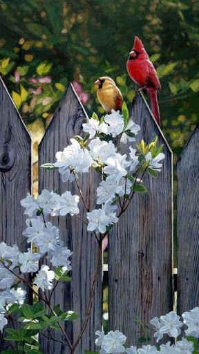 Picket fence birds ~ art by Terry Isaac