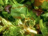 Cafe Green Salad by Melissa d'Arabian