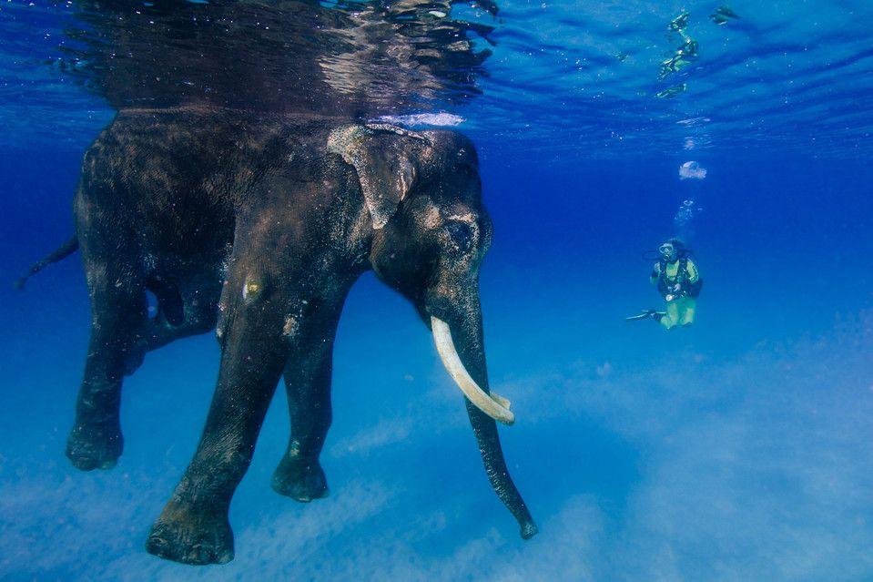 Swim with elephant