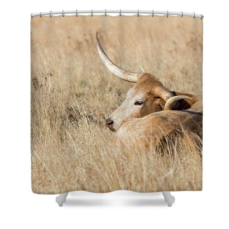Prairie Longhorn Shower Curtain For Sale By Bill Kesler Shower