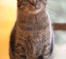 犬猫ペットの里親募集情報 ロンリーペット ペット 猫 子猫 猫