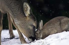 Real bambi and thumber