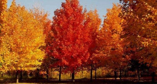 Resultado de imagen de otoño y árboles