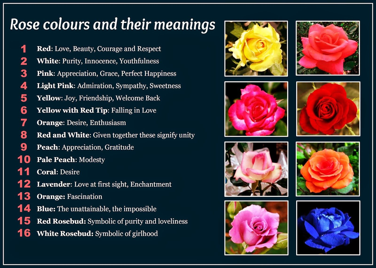 Beautiful Rose Colors and Their Meanings t that I floweres but cut
