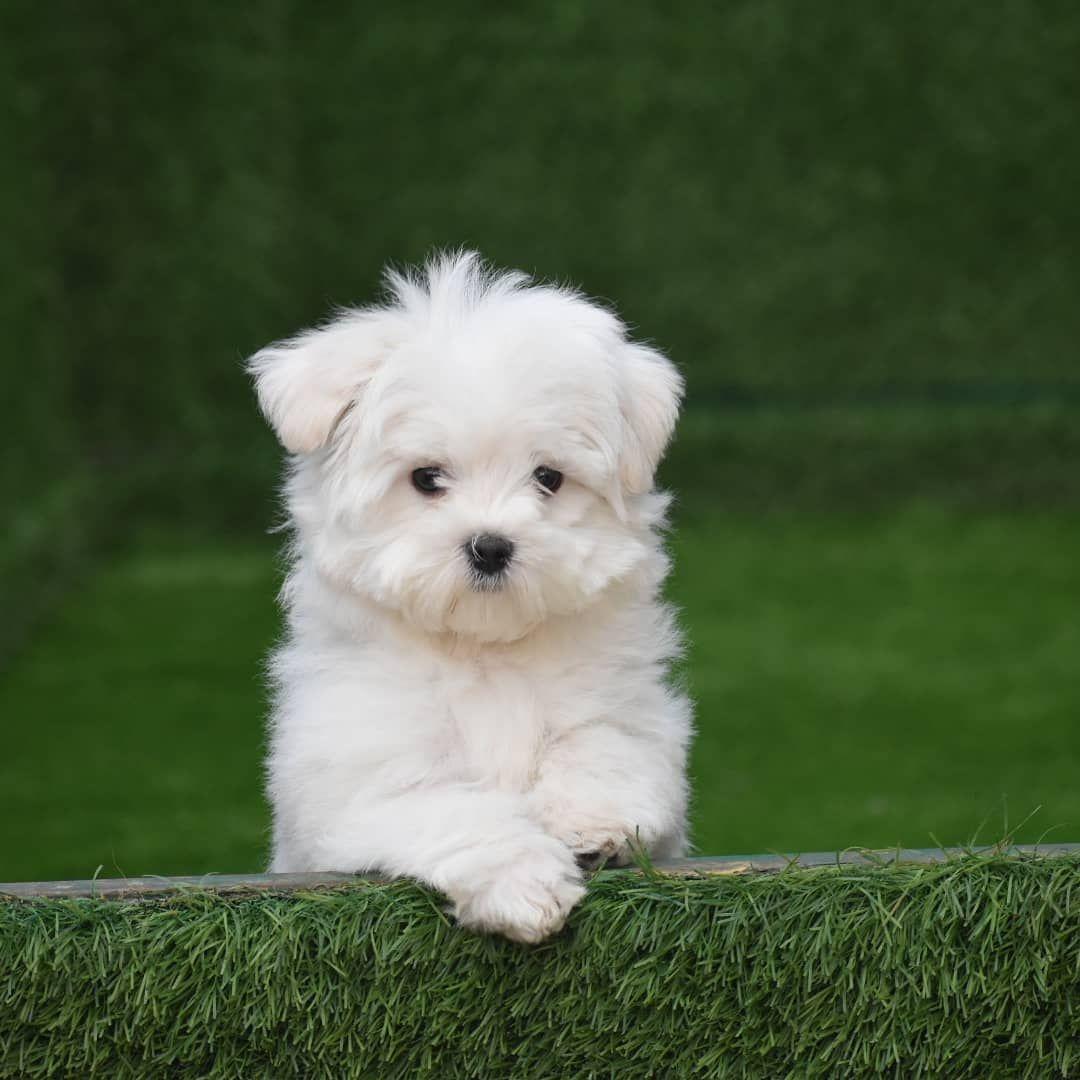 Best Pets Shops In Delhi Pets Shops In South Delhi In 2020 Pets Maltese Puppy Puppies