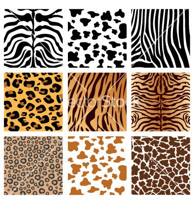 Animal Prints Google Search Image Resources For Art