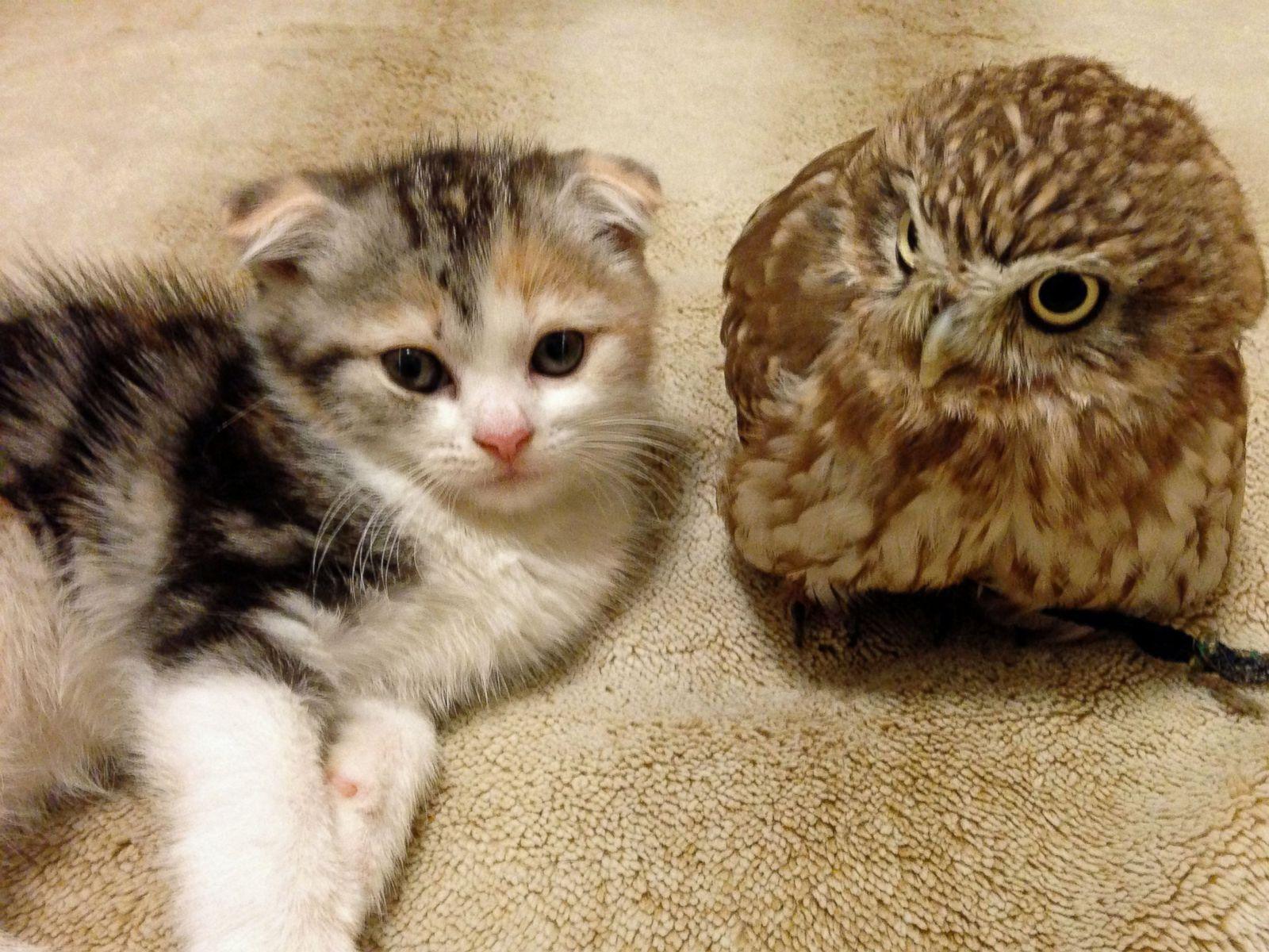 Cat And Owl Friends Http Ift Tt 2ofppco Cats Baby Animals Cat Photo
