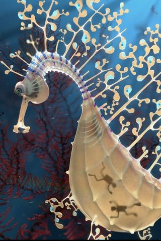 Sea horse with full tummy