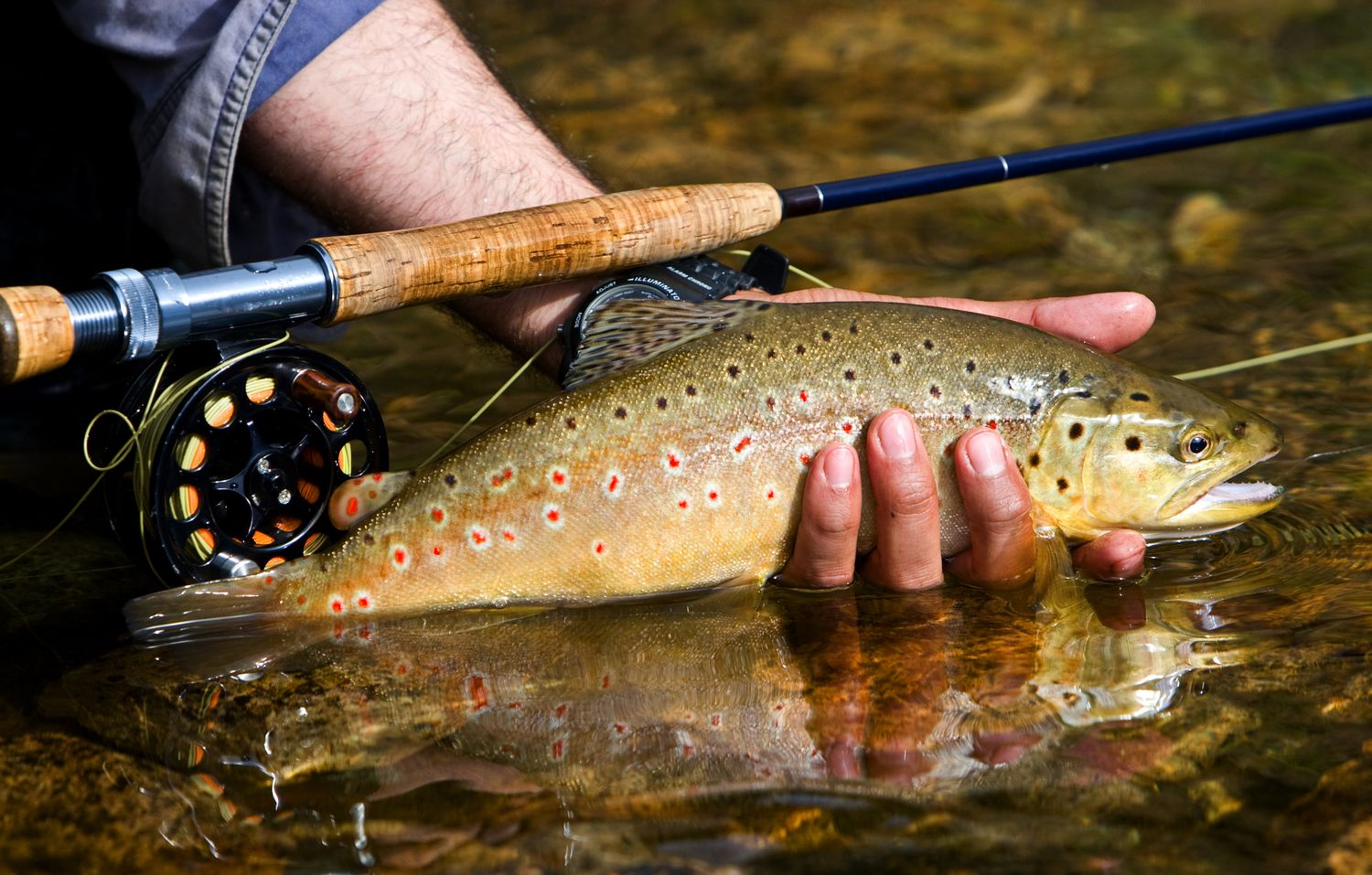 Your Ultimate Guide To Fishing In North Georgia Fly Fishing Trout Fishing Fishing Lodge