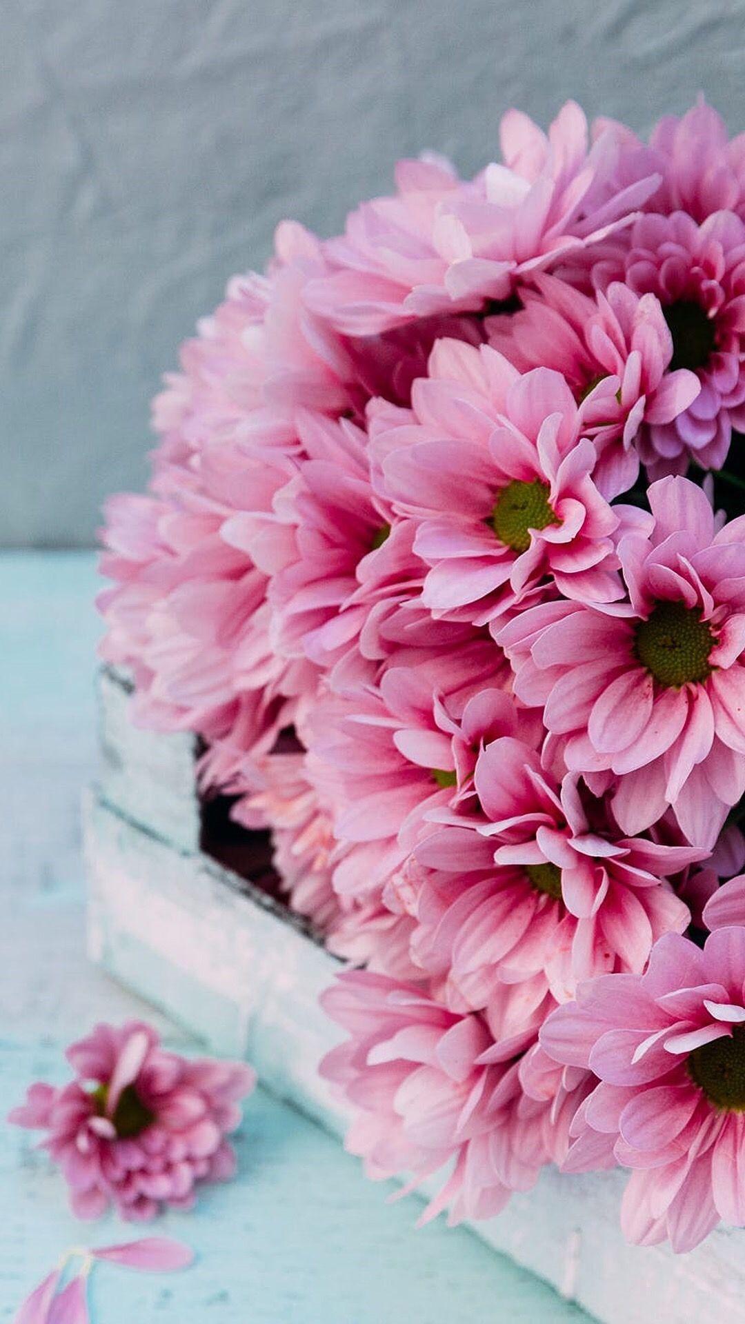 Beautiful Flower Backgrounds Flower Background Wallpaper