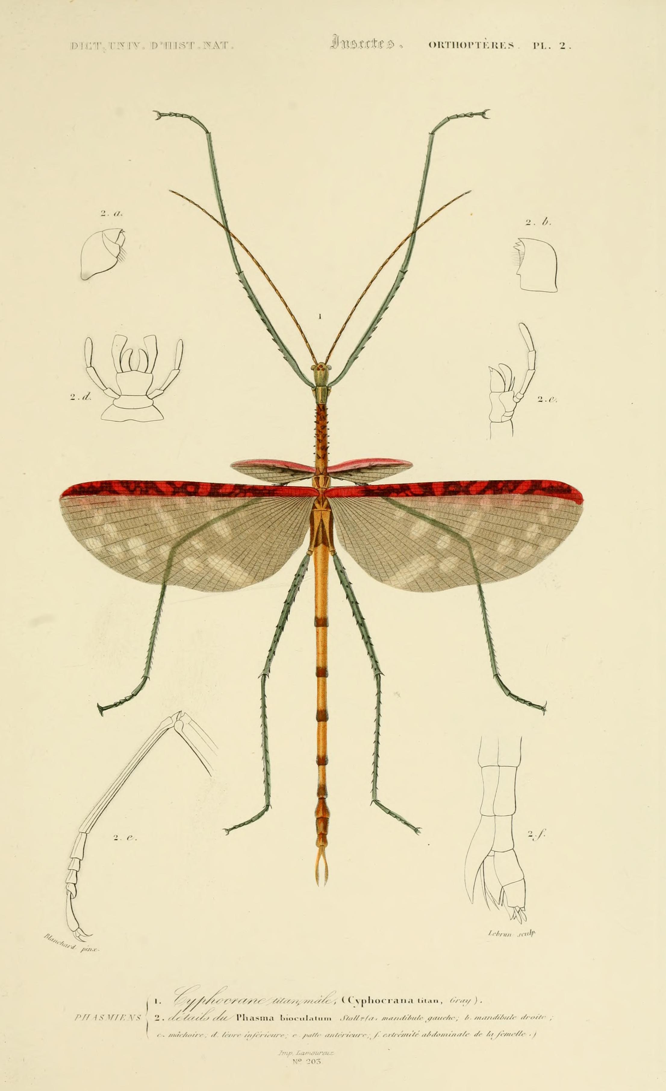Insect Ilustracion Cientifica