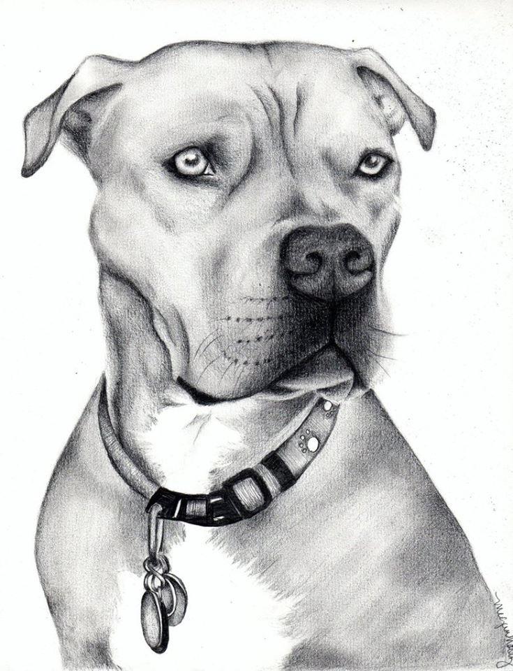 Рисунки крутые собаки