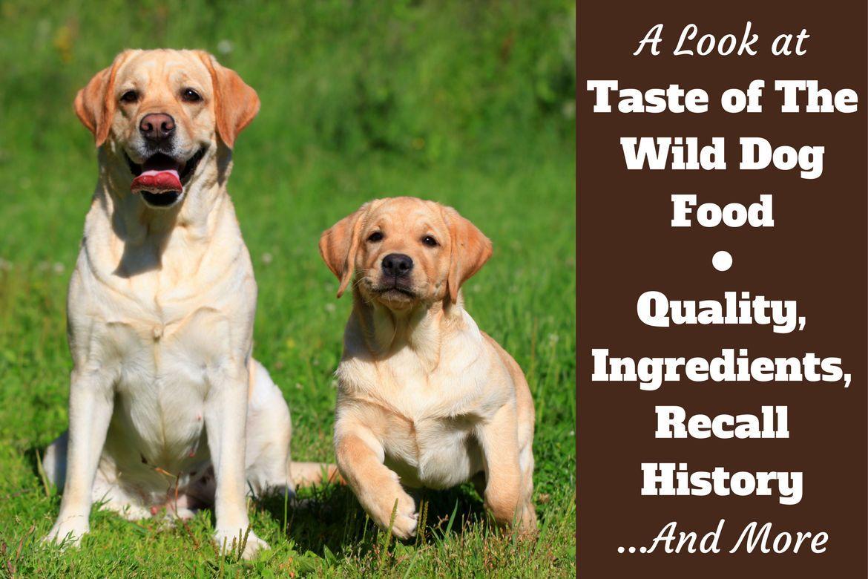 Taste of the wild dog food reviews ingredients recall