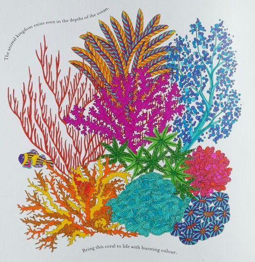 Millie Marottas Coral