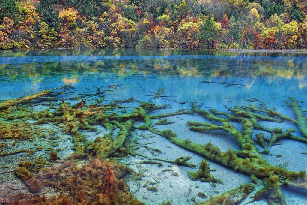 Jiuzhaigou on luonnonsuojelualue, joka sijaitsee Kiinan pohjoisosassa. Alue hyväksyttiin Unescon maailmanperintökohteeksi vuonna 1992, minkä...