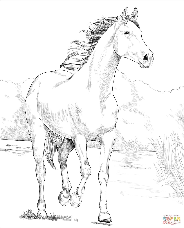 Shagya Arabian Horse Coloring Page Free Printable Coloring Pages Horse Coloring Horse Coloring Pages Horse Coloring Books